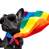 Equality, Diversity & Discrimination Online E-learning Courses